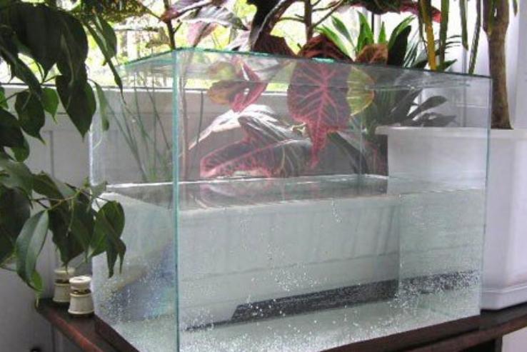 аквариум своими руками из коробки для детского сада