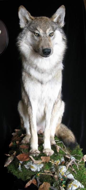 Effigy of a wolf, Kiev