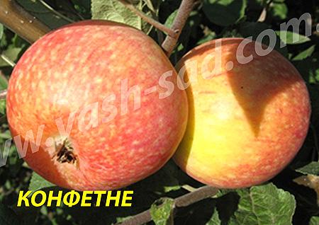 Купить Яблуня раннього строку достигання Конфетне