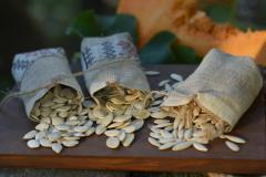 Pumpkin sunflower seeds: serovolzhsky, Ukrainian,