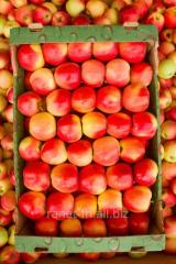 Apples Aydared, Brebern, Gala, Golden, Grenni