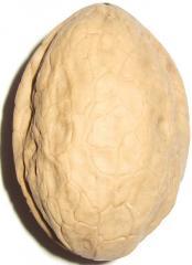 Саженцы грецкого ореха сорт Яровский.