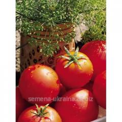 Seeds tomato Ballad