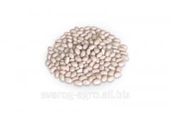 Beans White Navy. White beans White Navy petty