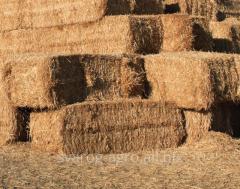 Wheat straw baled