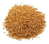 Горчица семена в большом количестве, продажа, опт