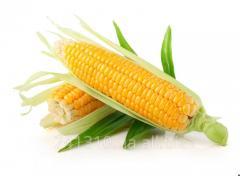 He corn is fodder