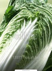 Cabbage Beijing wholesale