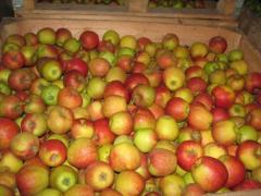 Яблоки оптом, продажа яблок, купить яблоки опт