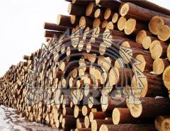 ROUND WOOD LOGS PINE - EXPORT FROM UKRAINE |