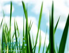 Травяная свежесть отдушка, 25мл
