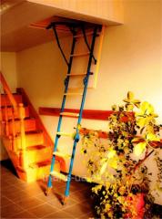 Ladder 120x63х280 garret TRIANS