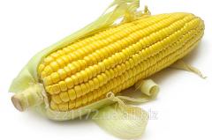 Corn technical wholesale
