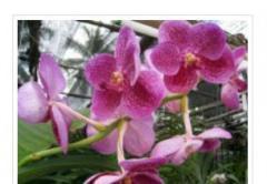 Бутик орхидей. Орхидеи оптом в Украине, Киев