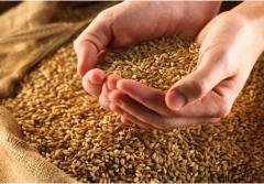 Grain fodder. Export. To buy grain. Deliveries