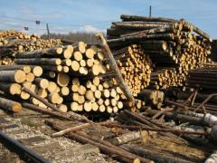Hardwood firewood pulpwood for sale from Ukraine -