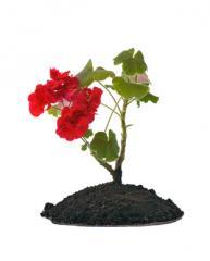 Soil fertile for plants