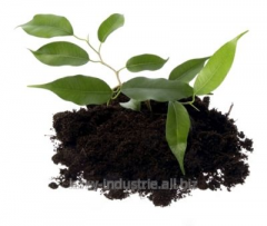 Soil for a lawn and other plants