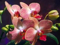 Бонсай,Орхидеи, фиалки, драцены, фикусы, кактусы