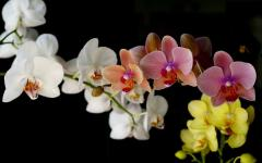 Кактусы и суккуленты  Бонсай  Орхидеи  Садовые