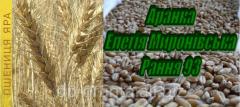 Насіння ярої пшениці Рання 93