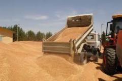 Выращивание, переработка, хранение зерновых и