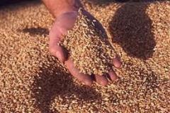 Закупка зерновых и технических культур по всей