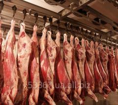 Half carcasses govyazhy