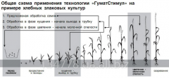 "Growth factors of plants of ""Gumatstimul"