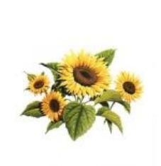 Соняшник (імпорт) 1 п.о Nk Meldimi