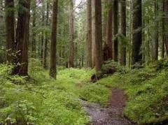 Лес строительный, осина продажа
