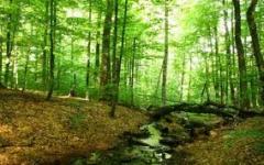 Лес строительный, ясень,лес строительный,