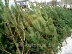 Новогодние елки 2015