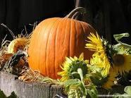 Pumpkin Musca