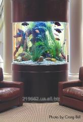 Aquarium from bent glass