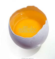 Яйцо столовое