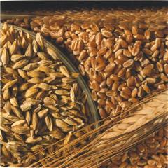 Пшеница 2 кл