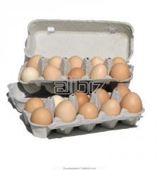 Category C1 egg