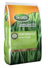 Газон устойчивый, семена газонных трав