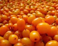Oil of a sea-buckthorn of 100 capsules