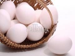 Eggs of poultry for consumption