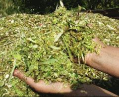 Силос комбикорма для животных продам в житомирской