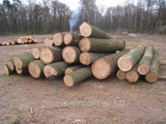 We buy oak round timber