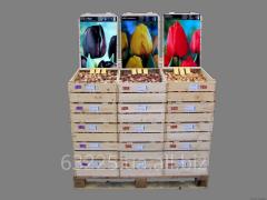 Луковицы и корневища цветочных растений для