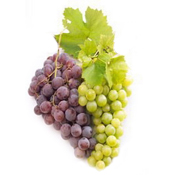 Крымский виноград с виноградника столовые и