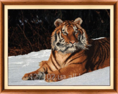 The scheme for beadwork the Tiger SB-146 Product