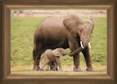 The scheme for beadwork Elephants SB-191 Product