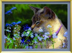 The scheme for beadwork the Flower cat SB-227