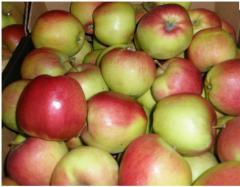 Яблоки для засолки