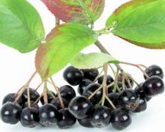 Aroniya, fruits
